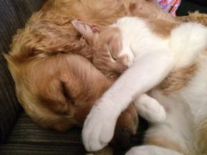 Blog online-Coaching Torhaus Kotelow, Telefoncoaching, Einzelcoaching, Gruppencoaching, Katze und Hund gemeinsam schlafend